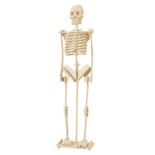 dcolor-juguete-de-rompecabezas-construccion-de-madera-3d-modelo-de-esqueleto-humano