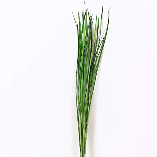Leewadee Dekobündel für Bodenvasen Trockengesteck Dekogras Dekozweige, 120 cm, Gras, grün