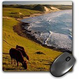 Danita Delimont - Cattle - Cattle grazing at Mazeppa Bay, Wild Coast, Eastern Cape, South Africa. - MousePad (mp_208172_1) Bay Cape