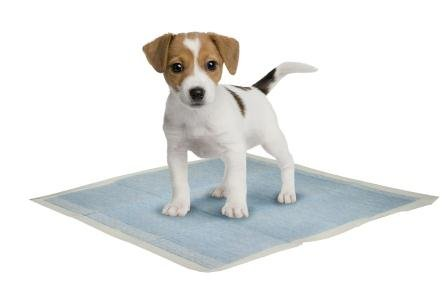 Puppy Dog Training Pads | 10 Pack Of Absorbent Pet Wee Sheets Keep Your Floor Pee Free And Your Carpets Cleaner.
