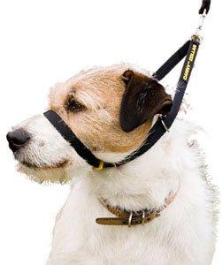 Artikelbild: Canny Dog Collar Black Größe 2