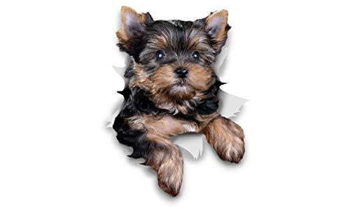 Winston & Bear Perro 3D pegatinas - Pack 2 - Cute Yorkshire Terrier para la pared, pegatinas de perro Yorkshire Terrier de nevera