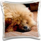 dogs-a-chow-chow-puppy-dog-on-a-tan-bedspread-16x16-inch-pillow-case