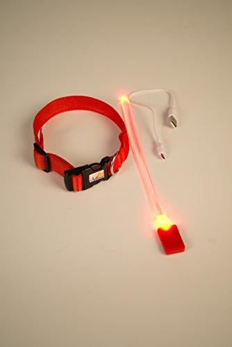 NEU Hundehalsband, -LR- LED mit neuem Lithium-AKKU, über 500x wieder aufladbar!!! , Das Leuchthalsband für ganz lange Zeit, nie mehr Batterien kaufen von PEDHOUSE (L, ROT) L: Halsumfang: 45-52cm - 4