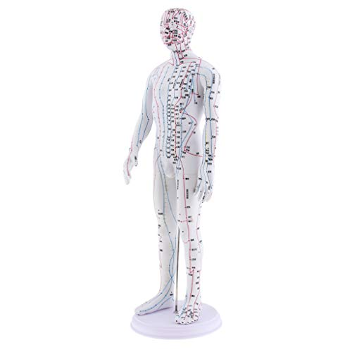 Gazechimp Modelo de Humana Suave Herramienta de Enseñanza para Estudio Chino Acupuntura, Meridian - Masculino