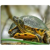 msd-natural-rubber-gaming-mousepad-image-id-32647917-yellow-tail-turtle-resting-on-the-branch-in-the