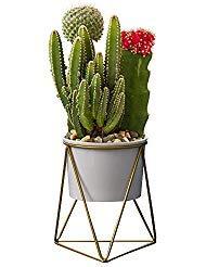 Modernes Pflanzen und Pflanzgefäßen, yousun 15,2cm Keramik Sukkulente weiß Pflanztopf Innen mit Metall Ständer für Sukkulenten/Cactus Bonsai Weiß/Gold
