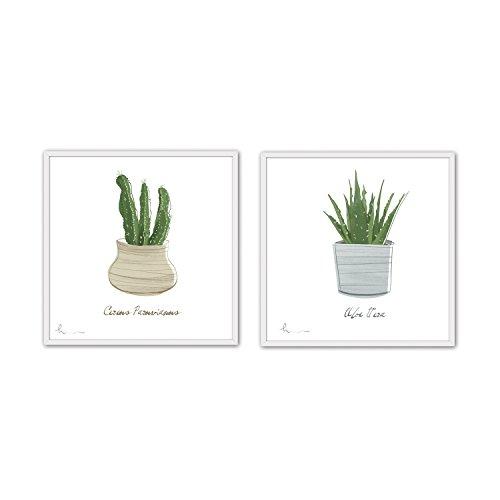 Cuadriman Cactus Aloe Cuadro