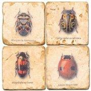 propassione-sous-verres-en-marbre-4-pieces-motif-coleopteres-finition-antique-avec-dos-en-liege-dime