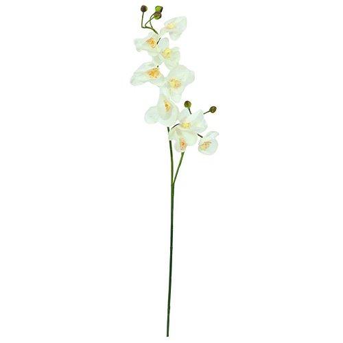 euro-palms-82530323-pianta-ornamentale-orchidea-100-cm-creme-bianco-weiss