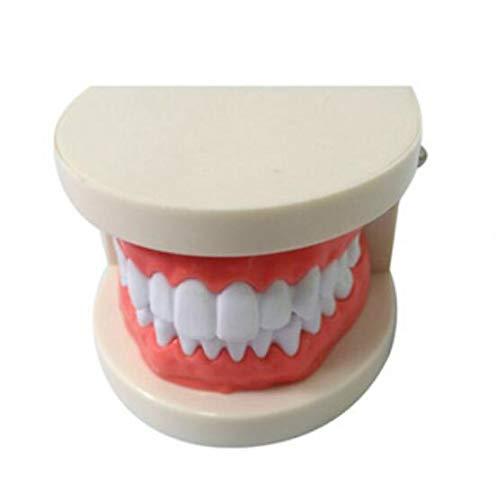 Standard Zahn Lehre Modell Dental Kind Zähne Teaching Modell Erwachsene Zähne Zahnfleisch Standard Demonstration Werkzeug