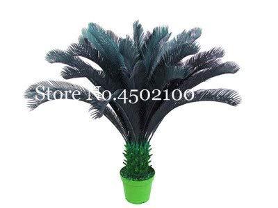 pinkdose 5 pz blue cycas bonsai, sago palm tree plant, cycas tree, pianta in vaso rara per giardino domestico pianta paesaggio popolare facile da coltivare: 7