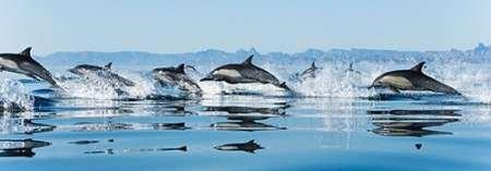 Feeling-at-home-Kunstdruck-Dolphins-Golf-von-Kalifornien-cm88x256-Poster-fuer-Rahmen