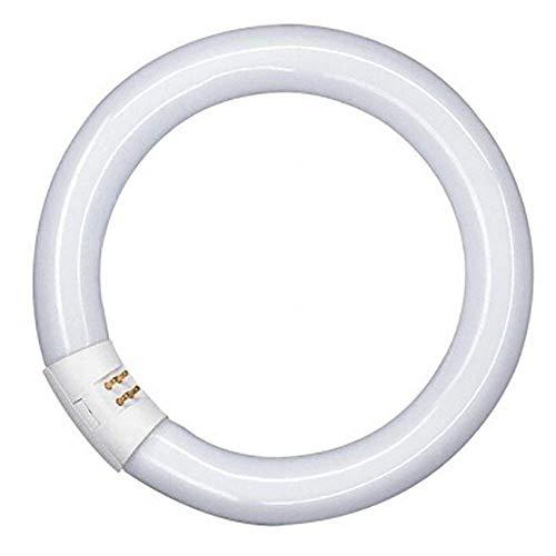 con attacco GR8 a 2/pin Robus lampadina fluorescente 2D da 16 Watt 3500/K luce calda