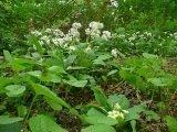 Just Seed Wald-Wildblumen-Mischung (kein Gras), Wildblume, schattige Bereiche, 20g