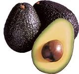 Avocado Hass 140-170 cm - Topf Ø 22 cm/Persea americana/Avocadopflanze/Avocadobaum