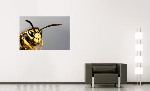 Bilderdepot24 Vlies Fototapete - Wespe - 90x60 cm - mit Kleister - Poster - Foto auf Tapete - Wandbild - Wandtapete - Vliestapete (Flügel Biene Antenne Und)