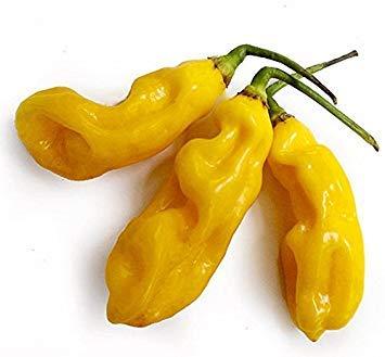 VISA STORE 25+ sierte Einzigartige Maysian Goronong Hot Pepper Samen-O 127