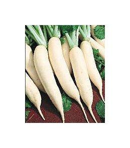 Les Graines Bocquet - Graines De Navet Blanc De Croissy - Graines Potagères À Semer - Sachet De 5Grammes