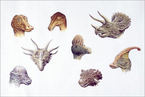 Forex-Platte 60 x 40 cm: Dinosaur heads compared, illustration von Science Photo Library