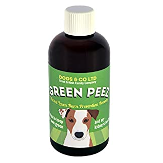 Green Peez dog urine grass patch repair neutralises burn marks on lawn 16