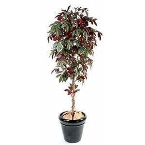 GD Bo Balcons Kunstpflanze Capensia, 150 cm