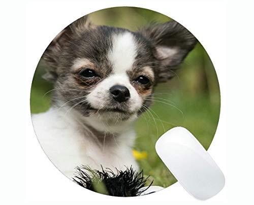 Runde Mauspads, Chihuahua Dog Puppy Baby Play Junge niedliche Chiwawa Gaming Mauspad
