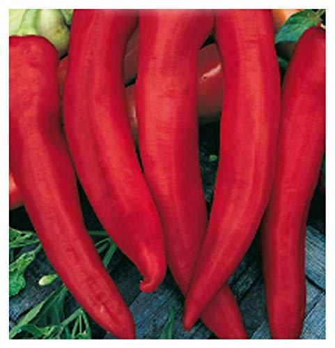 inception pro infinite 150 c.ca semi peperone cornaletto da appendere sel - corno di capra - capsicum annuum in confezione originale prodotto in italia - peperoni