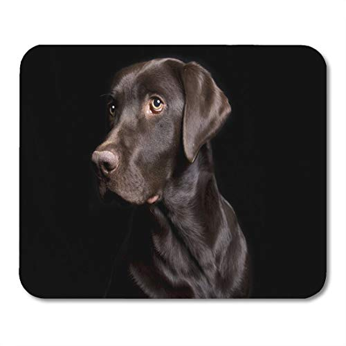 Deglogse Gaming-Mauspad-Matte, Mouse pad Retriever Brown Dog Low Key of Chocolate Lab on Black in Three Quarter Profile Labrador Dark mouses pad 9.5x7.9 Inches Mousepad -