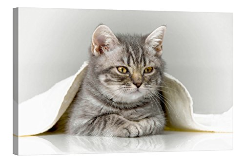 fototapete nachleuchtend Wandbilder Startoshop, nachleuchtende Leinwandbilder oder Selbstklebende Fototapete, Meine Katze Wanddeko, 60 cm x 90 cm