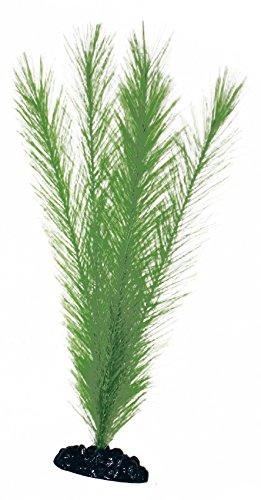 wave-blyxa-plante-classique-pour-aquariophilie-taille-l