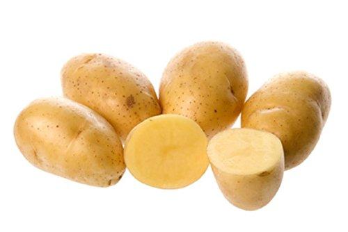 Bio Heidekartoffeln Kartoffeln Belana Hof Stövesandt - Familienbetrieb seit 1587 (10kg)
