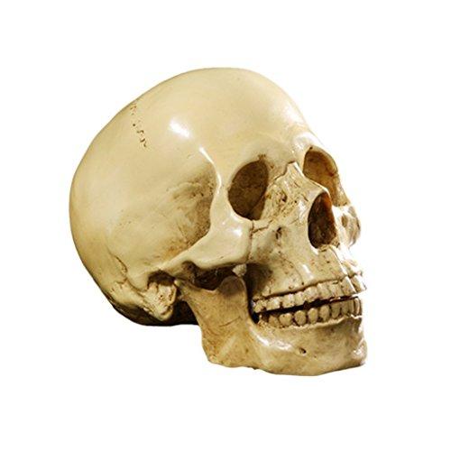 Yundxi Figura Esqueleto anatómico de la enseñanza del Modelo de Resi
