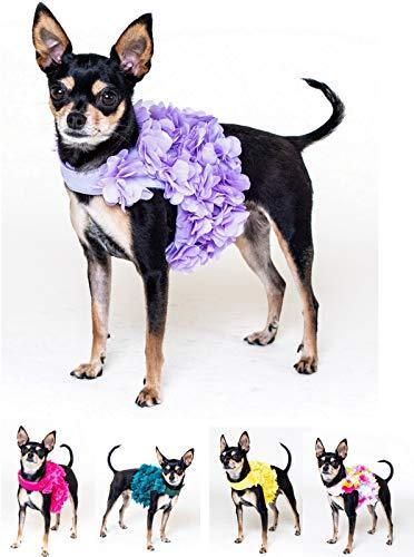 Lushpetz - Arnés perro pétalos flor correa juego