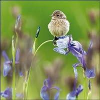 Woodmansterne Birthday / Blank Photographic RSPB Card - Bird perched on flower