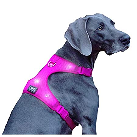 LED Hundegeschirr USB aufladbar mit 4 Farben | LED Hundeweste Leuchtend + reflektierend | Neues Modell mit Lichtleiter…