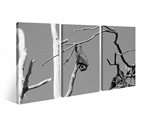 arz weiß Fledermaus Tier Baum Hund Bilder Wandbild 9C476 Holz - fertig gerahmt - direkt vom Hersteller, 3 tlg BxH:120x80cm (3Stk 40x 80cm) ()
