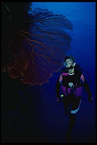 156018 Scuba Diver And Giant Red Pacific Sea Fan A4 Photo Poster Print 10x8