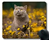 Gaming-Mauspad, Pet Yellow Flower Cat-Mauspad, Mauspad für Computer cat189