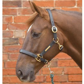 41%2BFLtEMdgL BEST BUY UK #1Hy Leather Head Collar(Black, Full) price Reviews uk