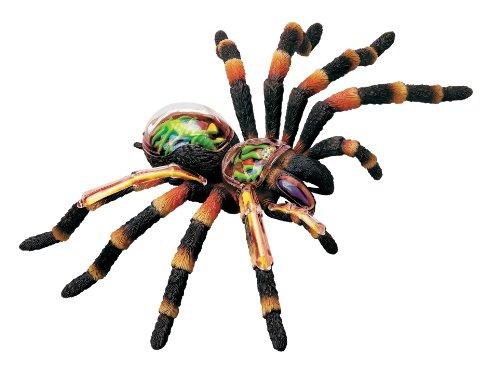 Revell X-Ray Tarantula Spider Anatomy Modello