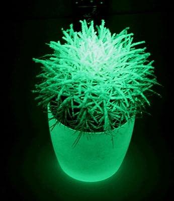 BALDUR-Garten Glowing Wonder in the Dark® von Baldur-Garten auf Du und dein Garten