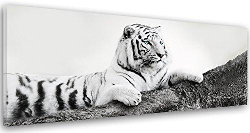 Feeby Frames, Leinwandbild, Bilder, Wand Bild, Wandbilder, Kunstdruck 40x120cm, TIGER, TIER, SCHWARZ-WEISS
