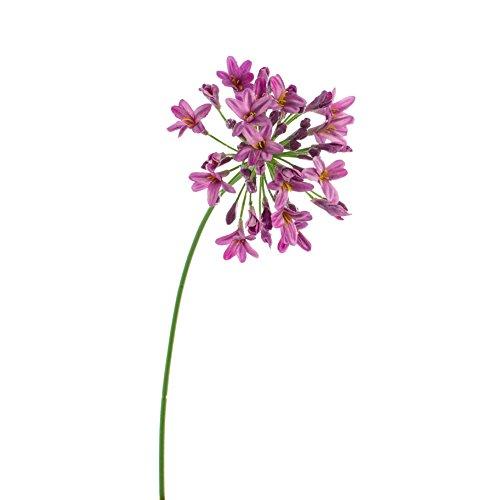 artplants Künstlicher Agapanthus PHILINA, violett, 75 cm, Ø 14 cm – Deko Blume