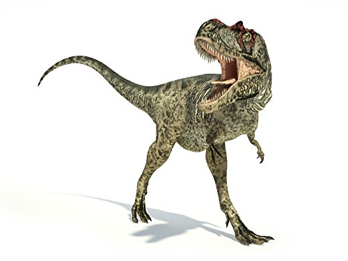 Leonello Calvetti/Stocktrek Images – Albertosaurus dinosaur on white background. Photo Print (83,31 x 62,48 cm)