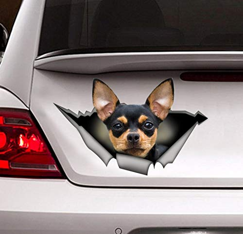 hua Sticker, Chihuahua car Decal,pet Decal Vinyl Sticker for Cars, Windows, Walls, Fridge, Toilet and More - 6 Inch ()