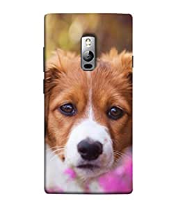 Snapdilla Designer Back Case Cover for OnePlus 2 :: OnePlus Two :: One Plus 2 (Picture Smile Pet Mammal Animal Pedigree Wallpaper)
