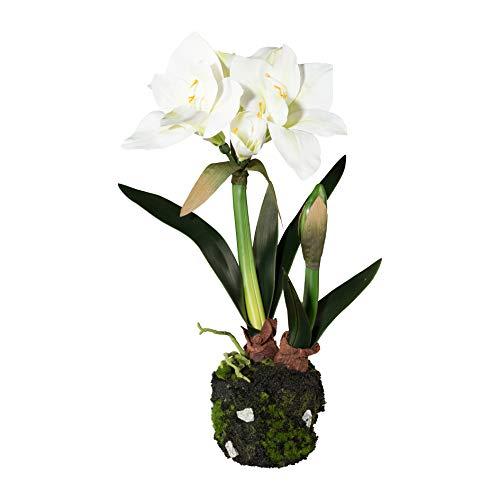 Homefinity Amaryllis im Moosballen 50 cm weiß Kunstblume Dekopflanze Ritterstern