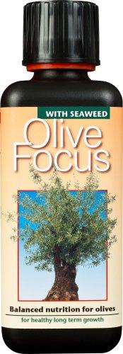 olive-focus-liquid-concentrated-fertiliser-300ml