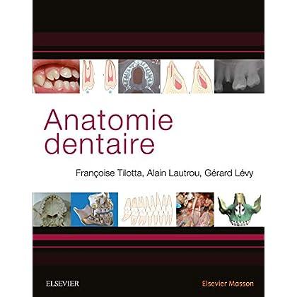 Anatomie dentaire